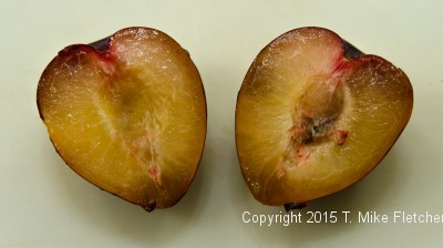 Pluots cut in half for Baked Pluots with Amaretti Crisp