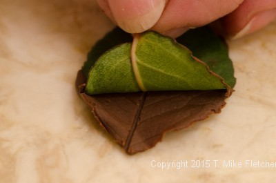 Pulling the leaf off the chocolate leaf for Buche de Noel